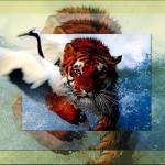 Tiger Trumps